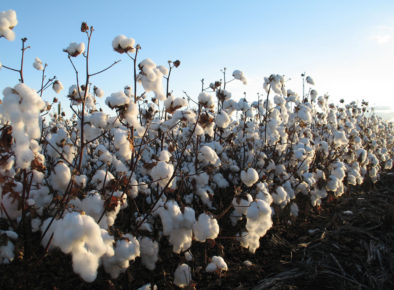 Cotton Innovation Network Communication Strategy