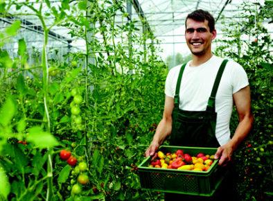 Horticulture Australia Ltd Stakeholder Engagement