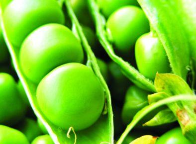 Woolworths Organic Growth Fund